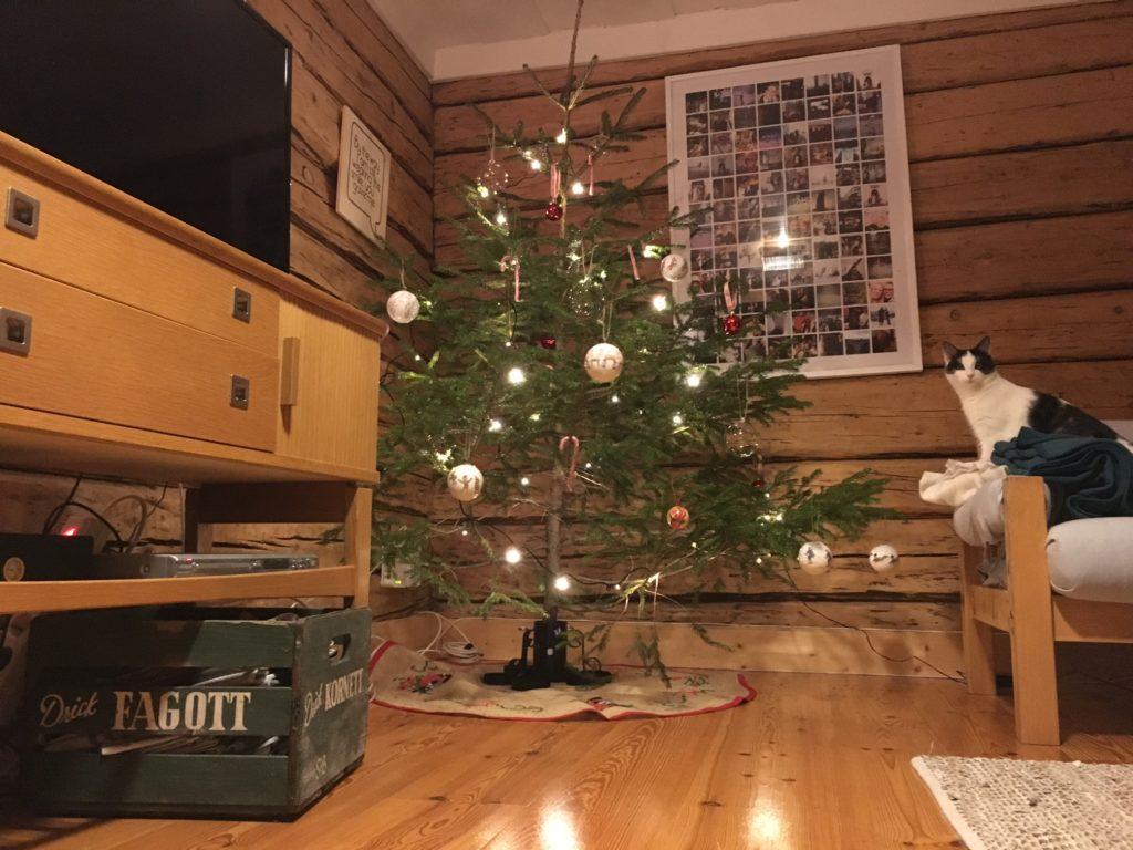 Julgranen är tänd och katten Janson är pepp!